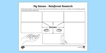 My Senses Rainforest Research Map Template - rainforest, map