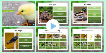 Spring Animals PowerPoint - Spring, animals, wildlife, german