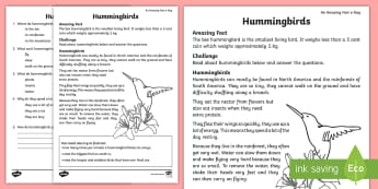 Hummingbird Comprehension Activity Sheet - worksheet, Year 1, Year 2, amazing facts, reading, comprehension, answer questions, text, birds, rai