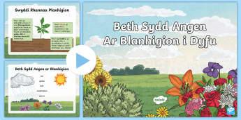 Pŵerbwynt Beth Sydd Angen Ar Blanhigion i Dyfu?  - plants, growth, planhigion, tyfu, blodyn, blodau,Welsh