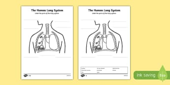Human Body Lungs Diagram Labelling Worksheet / Activity Sheet - ourselves, body, worksheet