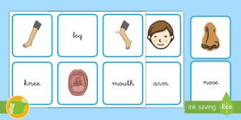 A1 Juego de snap: Las partes del cuerpo en inglés - English, human body, the body, anatomía, anatomy