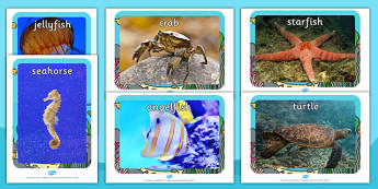 Sea Creatures Display Photographs  (Under the Sea) - Sea creatures, photo, photos, display photos, A4, display, fish, sea, seaside, display, posters, water, tide, fish, sea creatures, shark, whale, marine, dolphin, starfish, waves, sand