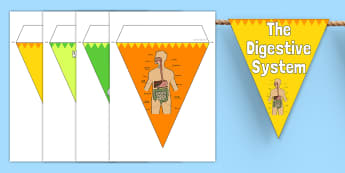 The Digestive System Display Bunting - digestive system, bunting