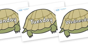 Days of the Week on Tortoises - Days of the Week, Weeks poster, week, display, poster, frieze, Days, Day, Monday, Tuesday, Wednesday, Thursday, Friday, Saturday, Sunday