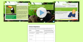Amazon Rainforest: Animal Adaptations PowerPoint Pack  - adaptations, rainforest, animals, survival, camouflage