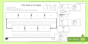 Life Cycle of an Apple Writing Activity Sheet - Lifapple life cycle, apples, apple, fall, worksheet,