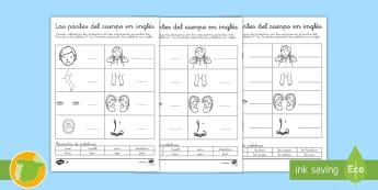 Ficha de actividad: Las partes del cuerpo en inglés - English, human body, the body, anatomía, anatomy