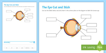 The Eye Cut and Stick Activity Sheet - Cut and Stick, eye, the eye, parts of the eye, worksheet, structure of the eye, seeing, sight, how w
