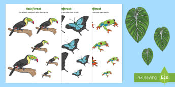 Rainforest Themed Size Ordering - rainforest, size ordering, size, ordering, order, activity