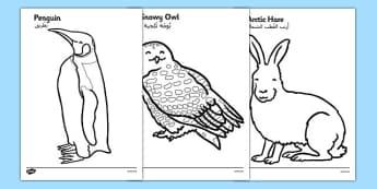 Arctic Animals Colouring Images Arabic Translation - arctic, animals, colouring, images, arabic