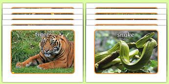 Jungle Display Photos Arabic Translation - arabic, Jungle, Rainforest, Display Posters, photo, display, photos, vines, A4, display, forest, ecosystem, rain, humid, parrot, monkey, gorilla