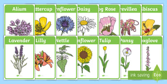 Flower Identification Display Posters - Flower Identification Display Posters - woodland, flower, identification, poster, activity, display,