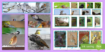 Bird Pictures Resource Pack - Picture Cards birds