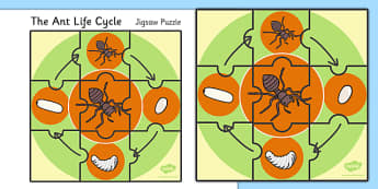 Life Cycle of Ants Jigsaw Puzzle - life cycle, ant, jigsaw puzzle, jigsaw, puzzle, activity, game