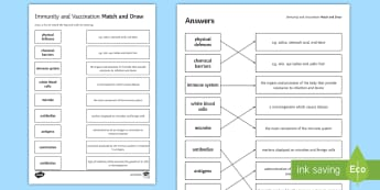 Immunity and Vaccination Match and Draw - Match and Draw, gcse, biology, immune system, immune response, immunity, white blood cells, antigen, starter activity