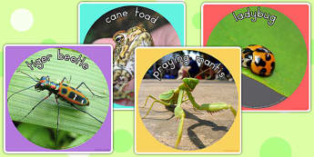 Minibeasts Display Photo Cut Outs - display photos, minibeast