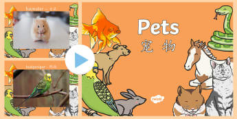 Pets Photo PowerPoint English/Mandarin Chinese - domestic animals, Pets Photo Powerpoint - pets, animals, pets photos, powerpoint, photo powerpoint,