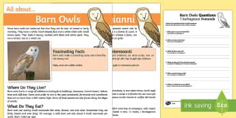 Barn Owls Reading Comprehension English/Italian - Barn Owls Reading Comprehension - barn owl, reading comprehension, comprehesion, comprehnsion, readi