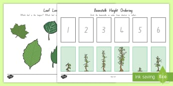 Beanstalk Height and Length Ordering Activity Sheets - length, height, measurement, comparing, worksheet