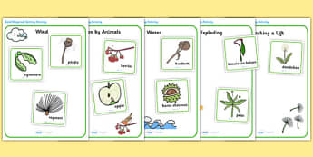 Seed Dispersal Sorting Activity - seed dispersal, seed dispersal sorting game, seed dispersal sorting cards, plant reproduction, living things, plant seeds