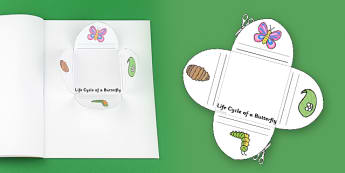 Butterfly Life Cycle Interactive Visual Aid - butterfly, visual