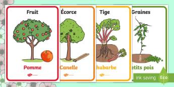 Affiches : Les plantes que l'on mange - printemps, plantes, fleurs, végétaux, le vivant, cycle de vie, fruits, légumes, cycle 2, cycle 1,
