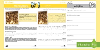 Honeybee Reading Comprehension Pack Arabic/English - Honeybee Reading Comprehension - honeybee, reading, comprehension, comprehesion, comprehnsion, readi