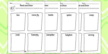 Minibeast Read and Draw Worksheet - minibeasts, draw, animals