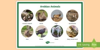 Arabian Animals Word Mat - Science, UAE, animals, living, world, Arabian, leopard, camel, falcon, oryx, saluki, lizard, sand, m