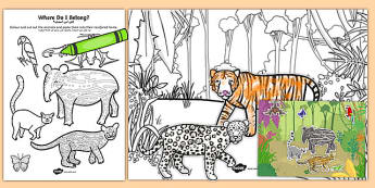 Rainforest Where Do I Live? Sorting Activity Arabic Translation - arabic, rainforest, sorting