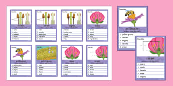 Plant Reproduction Can You Guess? Cards - Plant, Reproduction, Pollen, Stamen, Ovary, Ovule, Stigma, Stamen, Carpel, Sepal, Pollination
