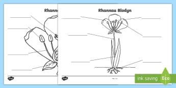 Taflen Weithgaredd Labelu Rhannau Blodyn - gwyddoniaeth, blodau, planhigion, labeli, plants
