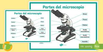 Póster DIN A2: Partes del microscopio - microscope, laboratorio, lab, laboratory, microorganismos, microorganisms