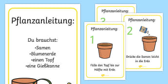 How to Grow a Plant Posters German - german, Plant, Growth, Topic, Foundation stage, Flower, knowledge and understanding of the world, investigation, living things, labelling, labelling plant