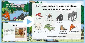 Las mejores mamás en el mundo animal - Día de la madre, Mother's day in Spain, power point, animales, animals, best mums, mejores madres,