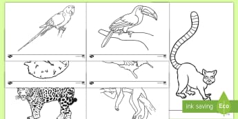 Rainforest Themed Coloring Activity - rainforest, jungle, color, coloring, geography, animals