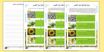 نشاط متمايز للقراءة والفهم عن دورة حياة نبات دوار الشمس