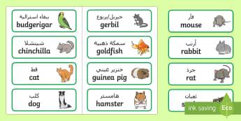 Pets Topic Word Cards Arabic/English - Pets word cards, Word Card, flashcard, flashcards, Pets, Pet, rabbit, cat, dog, hamster, gerbil, rat