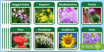 Plants and Flowers Flashcards - Plants and Flowers Flash Cards , knowledge and understanding of the world, investigation, living thi