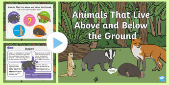 Animals That Live above and below the Ground PowerPoint - mole, badger, meerkat, fox, sett, den, hole, dig, habitat