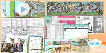 Science: Animals Including Humans Year 2 Unit Pack