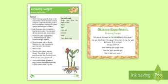 EYFS Growing Ginger Science Experiment and Prompt Card Pack - The Gingerbread Man, Traditional Tales, growing, sprouting, plants, gardening, ginger, growing thing