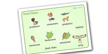Food Chain Word Mat (with Images) -  food, chain, food chain, foods,word mat, mat writing aid, with images, images, producer, consumer, predator, cycle, different foods, animals, animal, eating, growing, consuming, producing, predating, nature, natur