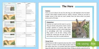 Hare Differentiated Reading Comprehension Activity - Science: Living World, animals, Arabian, hare, desert, camouflage, reading comprehension, differenti