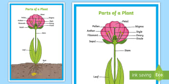 Parts of a Plant Display KS2 - - plants, flowers, stem, leaf, roots, leaf,