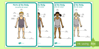 * NEW * Parts of the Body Head And Shoulders Display Posters - English / Spanish  - EAL,Parts of the Body (A4) - parts of the body, Eyes, nose, mouth, display, chest, tongue, ourselves