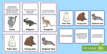 Incredible Mother Animals Matching Cards - Canada Mother\'s Day 14th May, Junior Grades, Grade 4, Grade 5, Grade 6, Animals, Facts, Science a