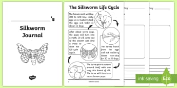 Silkworm Journal Writing Template - silkworms, Australia, life cycle, mulberry, mini beasts, Journal, writing, observation,Australia