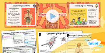 Science: Animals Including Humans: Digestive System Parts Year 4 Lesson Pack 1